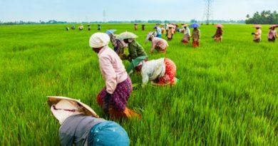 Karnataka School Converts Land Into Farms, Teachers Resort To Menial Jobs To Survive Pandemic